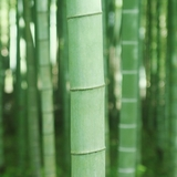 竹の駆除方法4つ!除草剤は効果アリ?業者依頼時の費用も