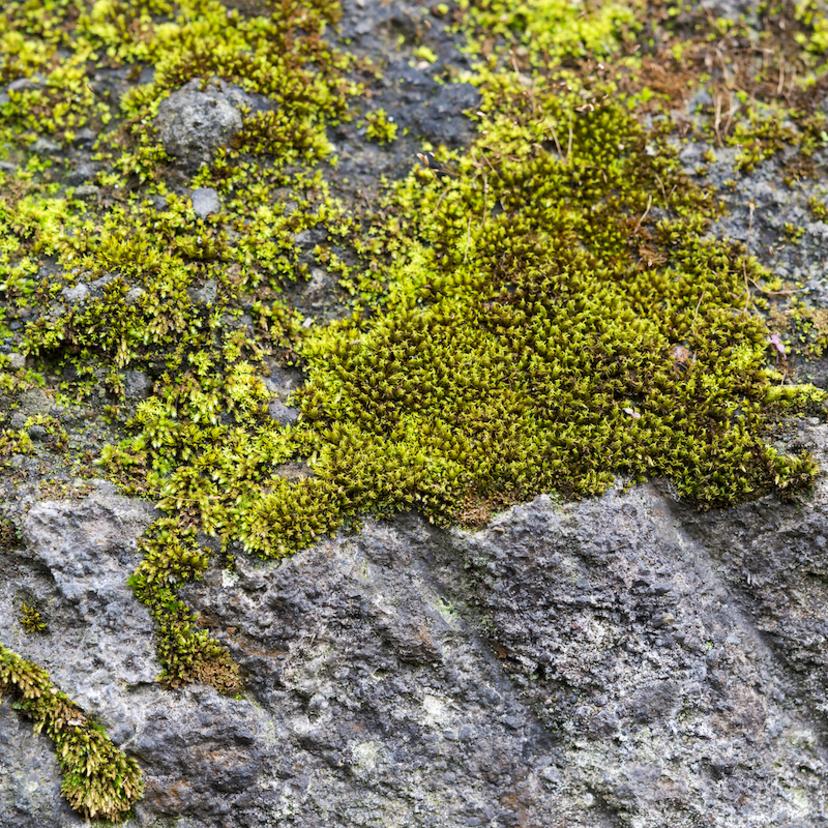 コンクリートに生えた苔の除去方法4つ!苔の生える原因や対策も