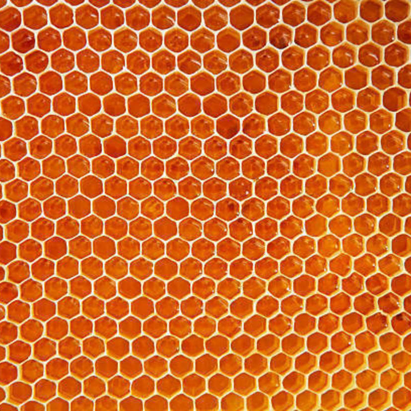 スズメバチの蜂の巣を自分で安全に駆除する方法6ステップ!【プロ監修】