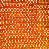 スズメバチの蜂の巣を自分で安全に駆除する方法6ステップ!