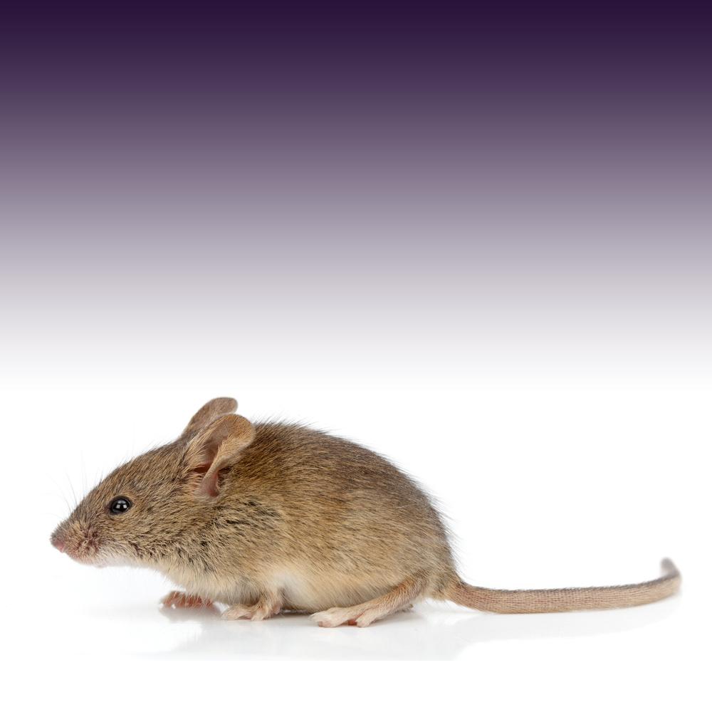 ネズミ 嫌い な におい