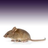 ネズミの嫌いな音で撃退!5ステップで駆除