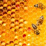 自分で蜂を駆除する前に知っておくべき6つのポイント