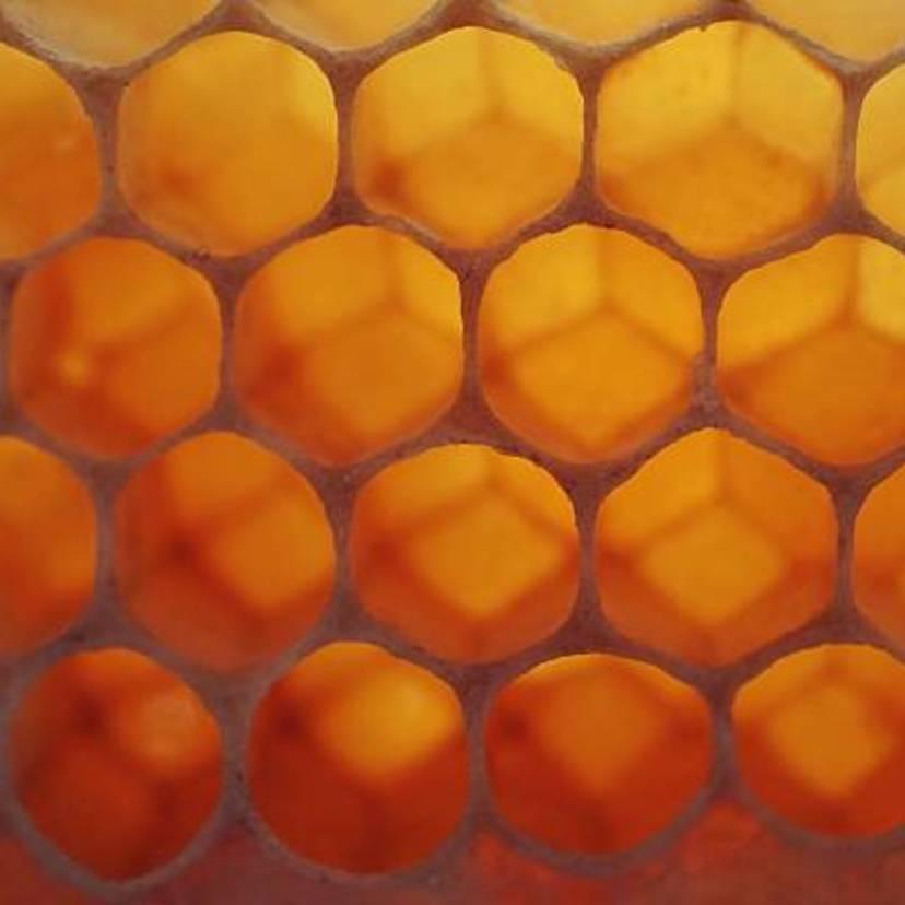 蜂の巣の駆除方法5ステップと業者にたのんだ時の相場【プロ監修】