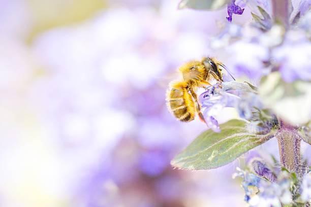 せ を に アシナガバチ 巣 ない 方法 作ら