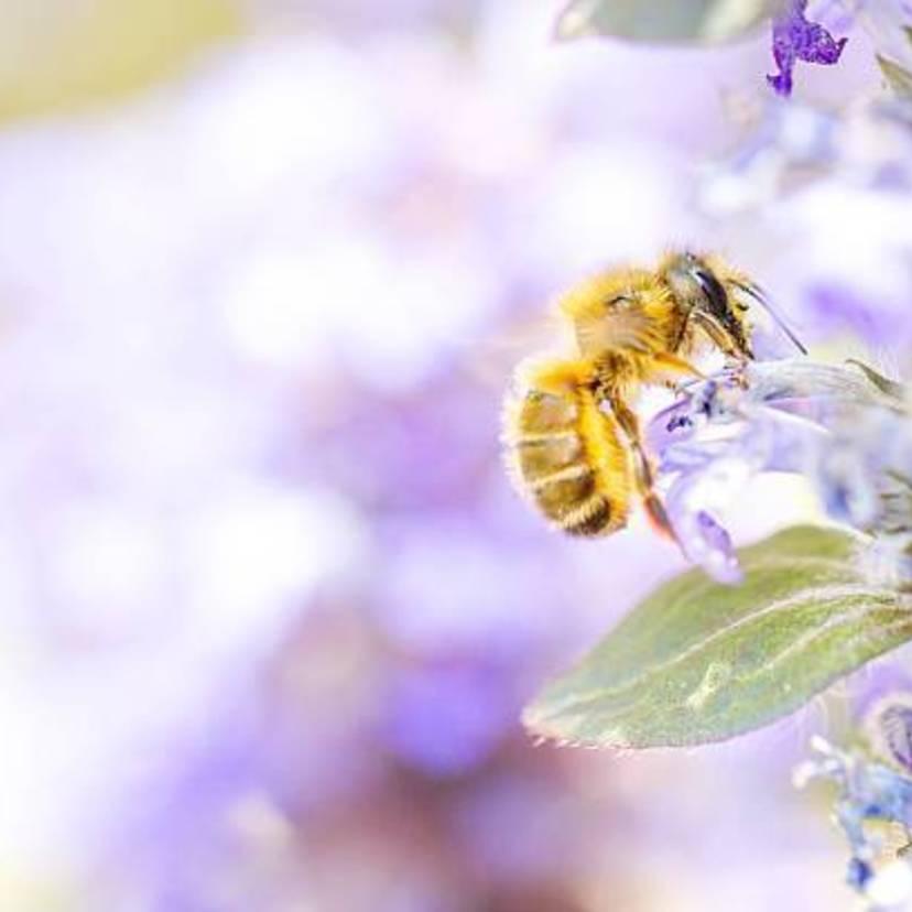 【プロ監修】アシナガバチの巣を作らせない!駆除方法7ステップ【業者料金比較付き】
