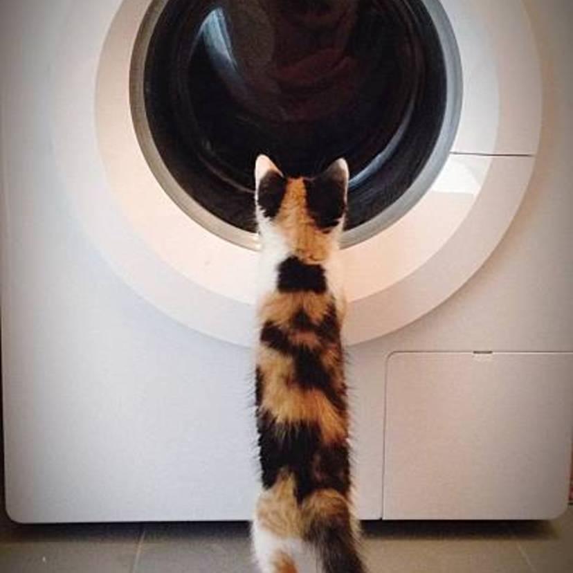 洗った洗濯物が臭い!生乾きのニオイの6つの原因と9つの対策