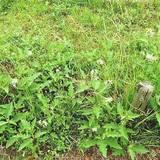 雑草の種類10パターンと見分け方を解説!庭や畑の雑草はどれ?