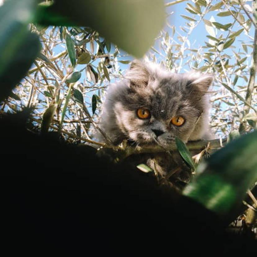 野良猫対策グッズ15つ。猫よけモスキート音は効果あり?