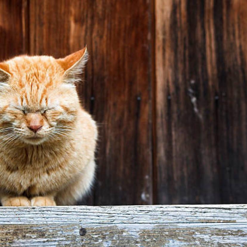 野良猫は駆除できる?対策方法7個!猫の習性を知って被害を防止