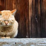 野良猫の駆除方法7選!猫の習性を知って被害を防止