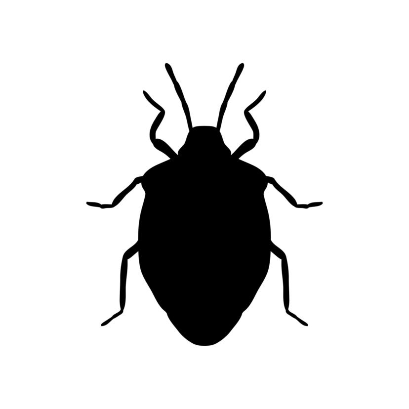 カメムシの効果的な駆除方法5つとおすすめ殺虫剤TOP10【プロ監修】