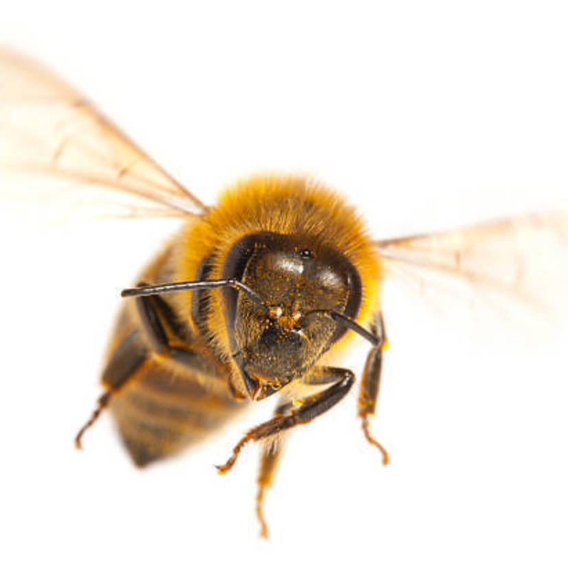 蜂の巣を自分で駆除するための方法7ステップ