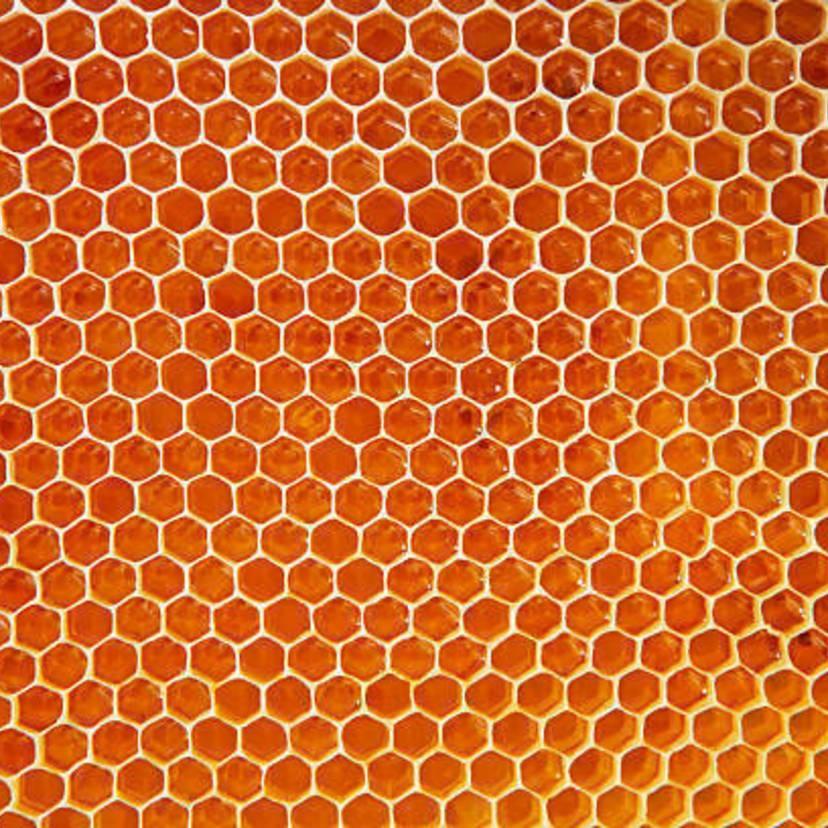 蜂の種類4つの見分け方!特徴と危険度を徹底的にまとめてみた