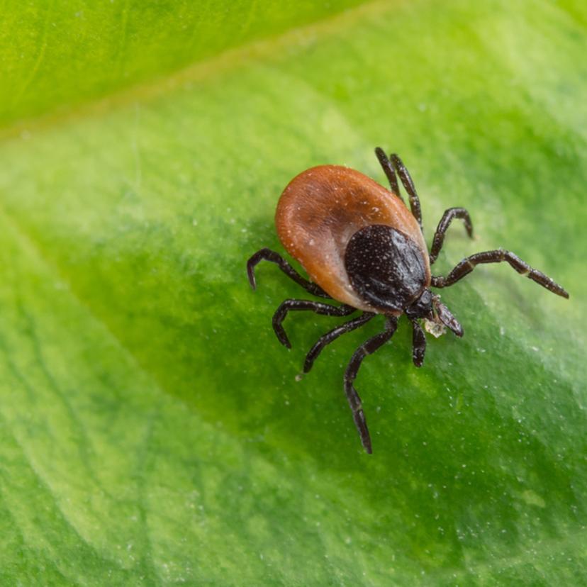 室内や庭のマダニを駆除する方法6つとおすすめの殺虫剤11選【プロ監修】