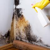 押入れカビを除去する掃除方法4つと予防方法7つ!DIYも活用
