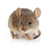 ネズミ用超音波駆除器4選と効果がある超音波アプリ5つ