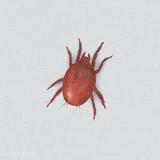赤いクモみたいな虫「タカラダニ」の特徴6つ!小さくても毒はある?