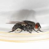 ハエのおすすめ駆除方法8つ!蚊取り線香やペットボトルで退治できる?