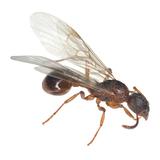 羽アリが家に大量発生する原因3つと対策5つ。シロアリだと危険!【プロ監修】