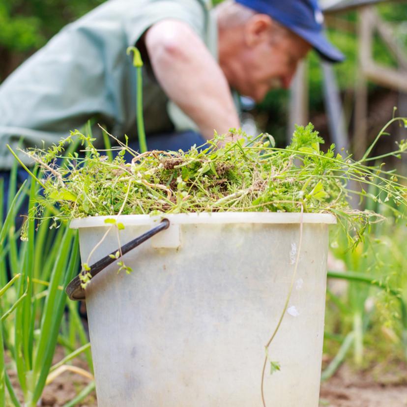 雑草を簡単に処理する15の方法