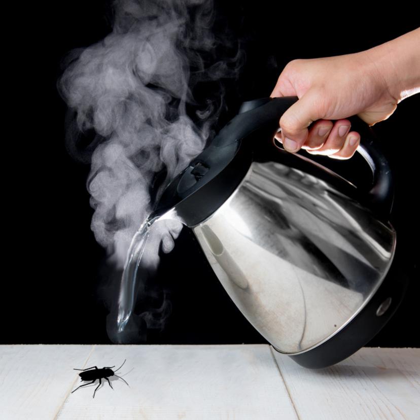 ゴキブリは熱湯で瞬殺!熱湯をどれくらいの温度や量で当てたら死ぬ?