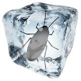 冬のゴキブリ駆除対策3つ!越冬させず死滅させるには?