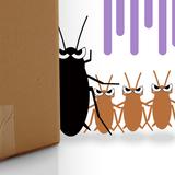 ゴキブリの幼虫の種類別特徴14つと駆除方法5つ!大きさや色は?