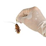ゴキブリの卵の特徴7つ・場所・孵化させない駆除方法5つ