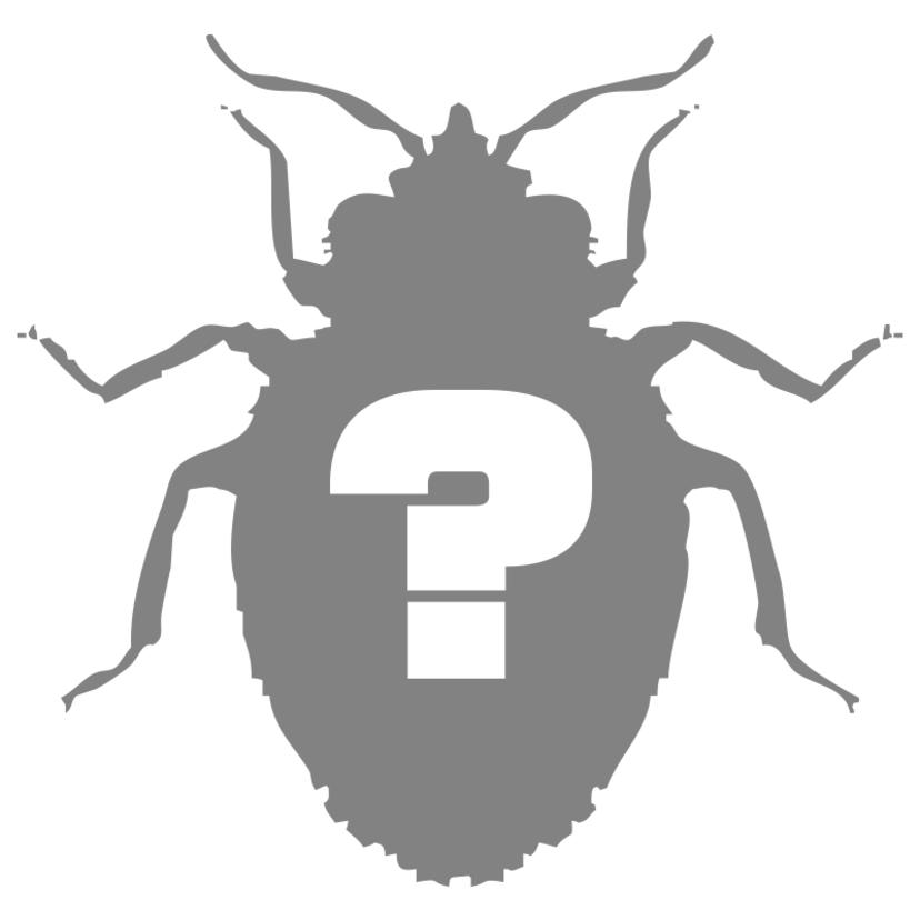 トコジラミの生態の特徴と自分でできる駆除対策方法3つ