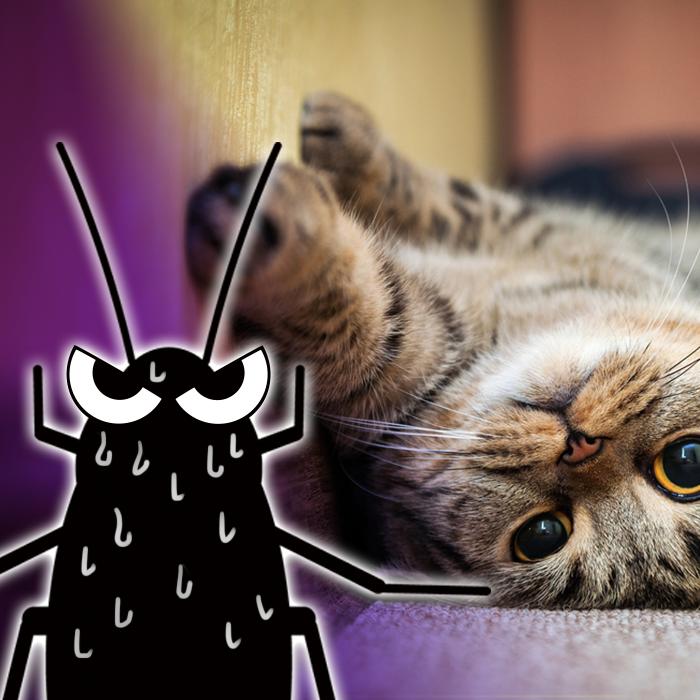 猫 ゴキブリ 食べる