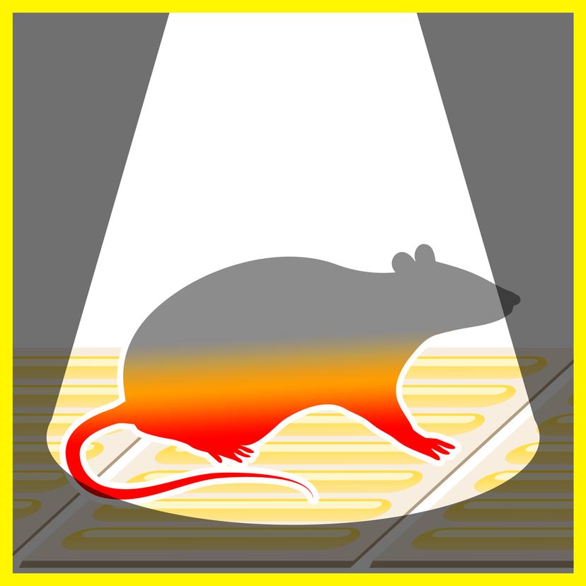 ネズミ捕り粘着シートとは?成分・使い方と服や床からの取り方・落とし方