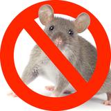 ネズミの自分でできる駆除方法8つ!業者の相場金額は?