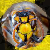 スズメバチ用殺虫剤おすすめ10選。ゴキブリ用スプレーでも駆除できる?