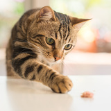猫の捕獲方法6選!野良猫捕獲のコツは?餌・網・ネットなどが使える?
