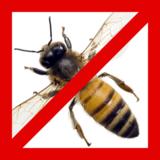 蜂の退治方法を種類別に解説!自分で退治する方法は?