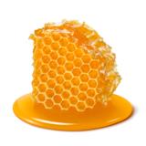 蜂の巣の種類4つと特徴・見分け方!見つけた後の対処方法