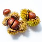 虫食い栗の見分け方・出し方・処理方法・予防対策!食べられる?