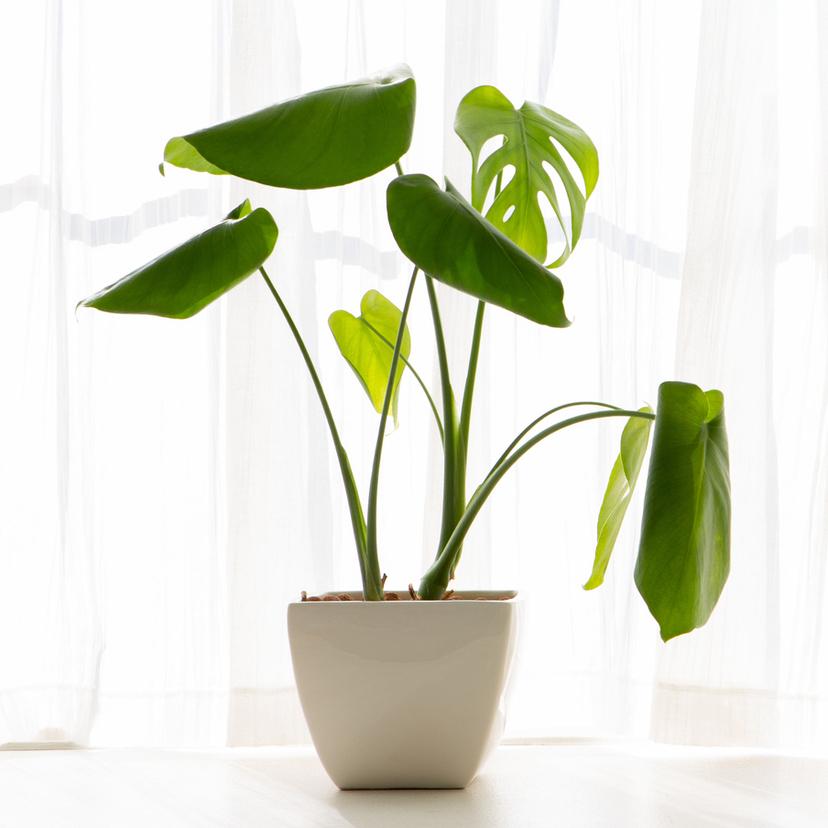 観葉植物の虫の駆除方法5個と虫がわかない方法7個!黒くて小さい虫は?