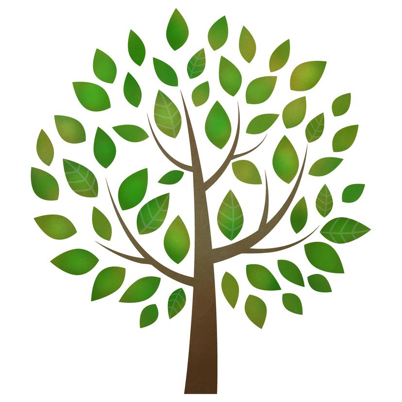 シンボルツリーのおすすめ25選!人気の種類や選び方は?