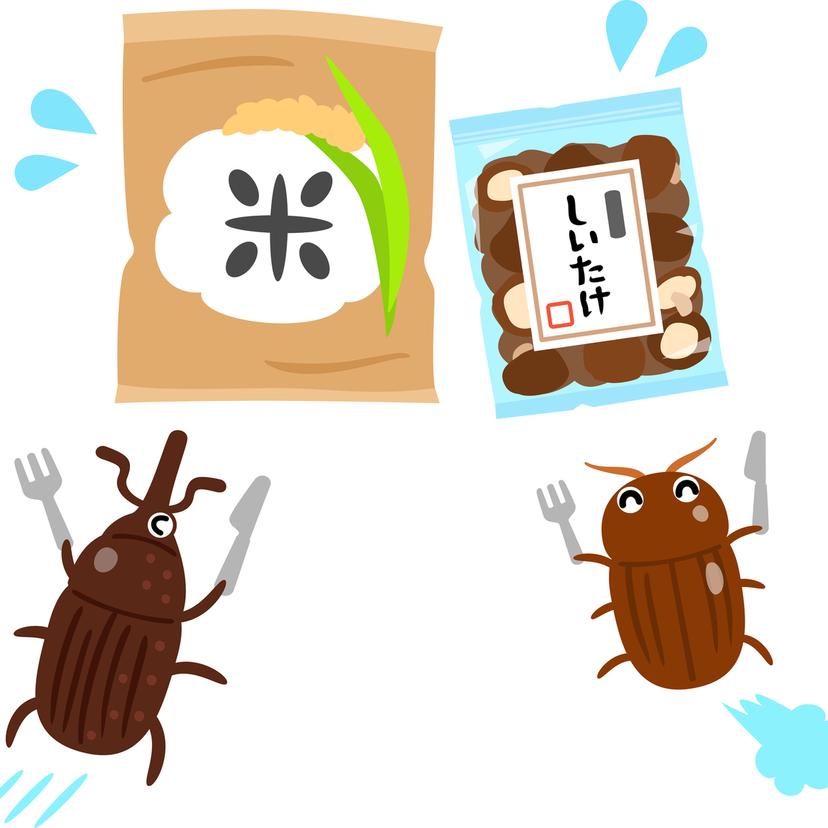 茶色い小さい虫が家に発生したらシバンムシかも?種類や駆除方法