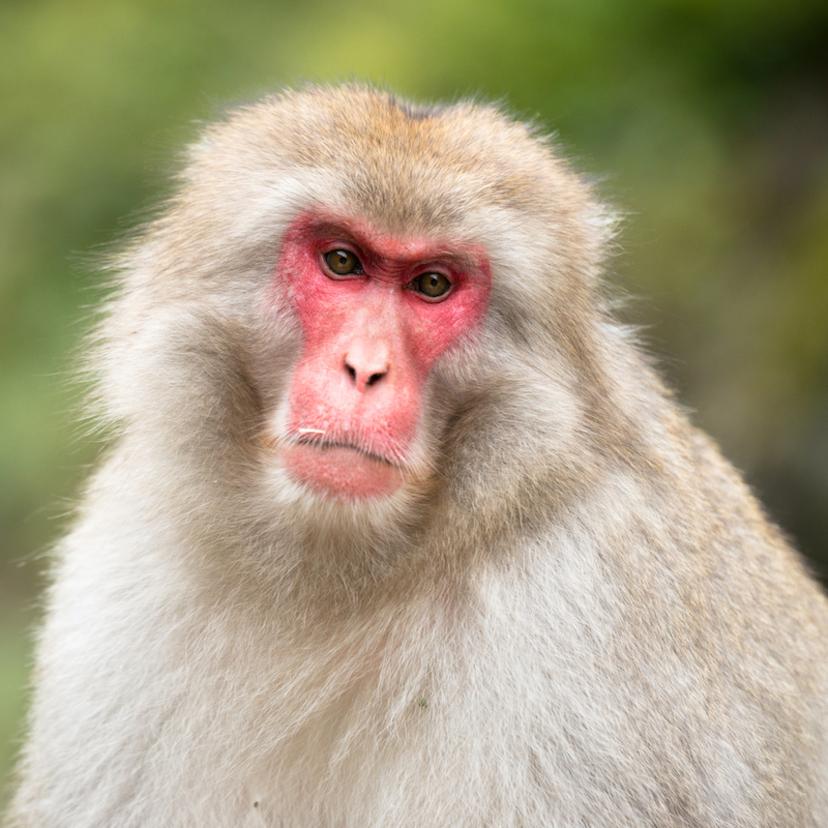 猿対策7個!ヘビや犬で猿を追い払うことができるのか?