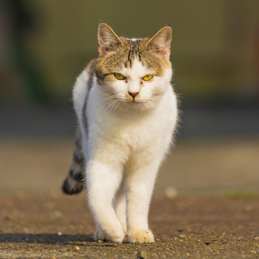 野良猫を寄せ付けない方法25個!寄ってくる原因と対策は?