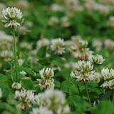 雑草の白い花の種類や名前一覧。紫の花の雑草もご紹介
