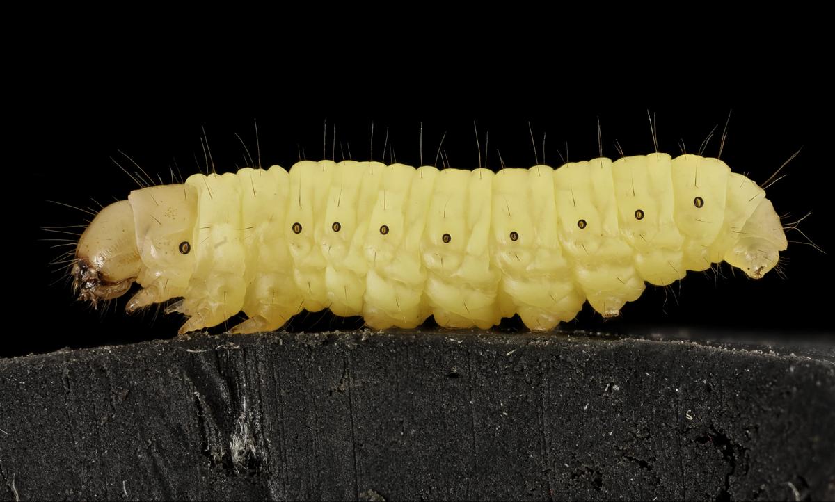 薬 毛虫 駆除 毛虫駆除のやり方とは?木酢液や駆除薬の使い方を解説