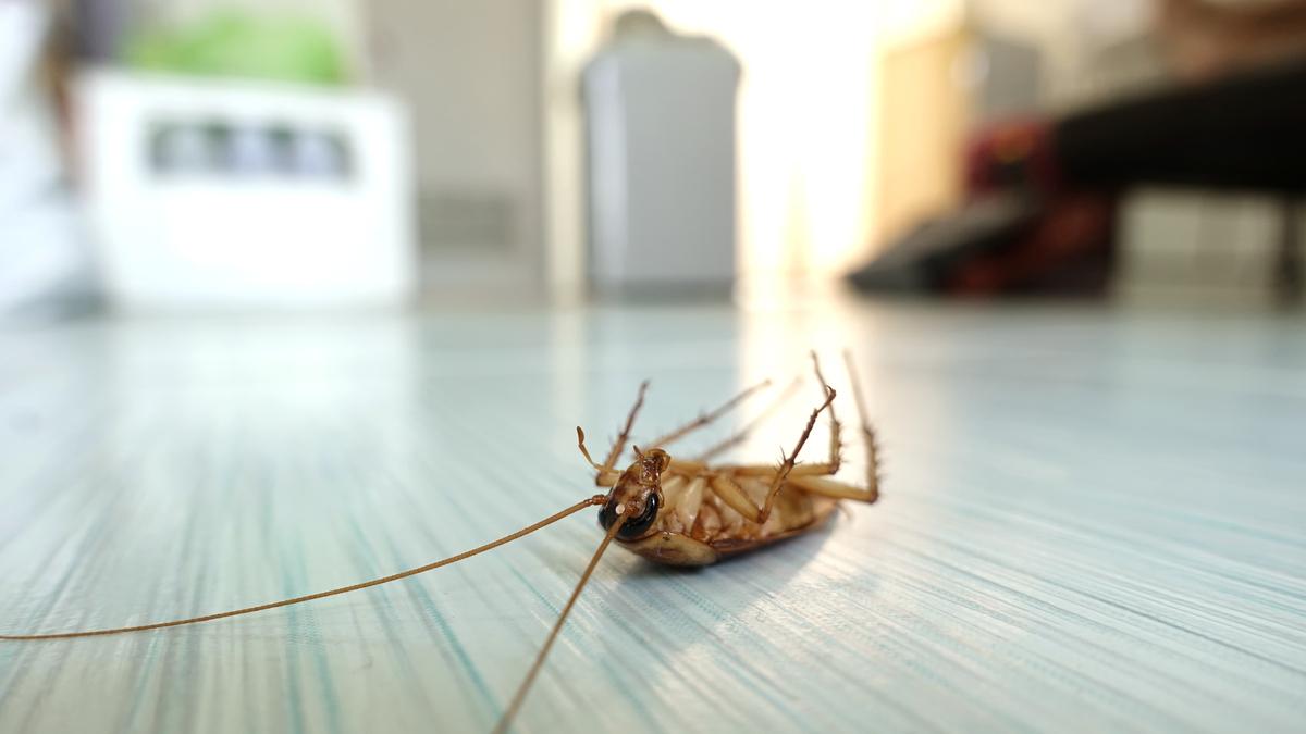 の 作り方 団子 ゴキブリ