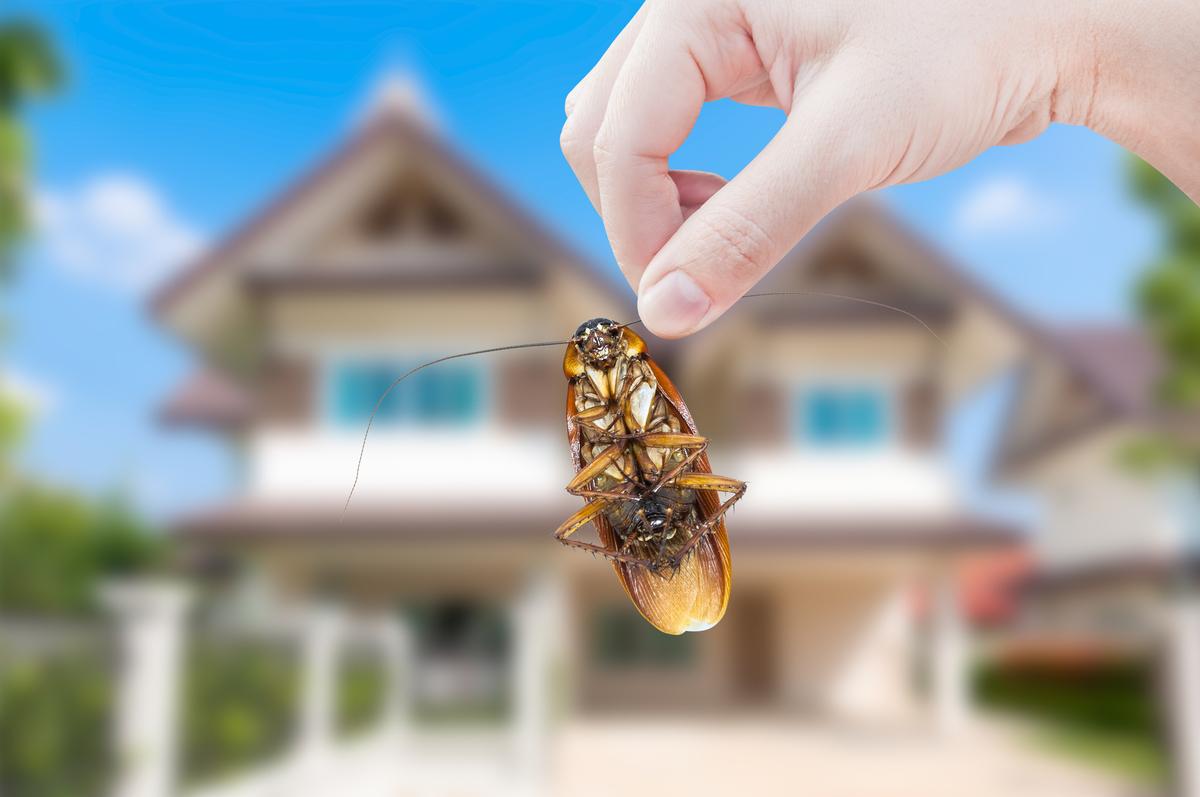 ゴキブリ 対策 新築